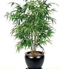 low light indoor plants house plants trees house plants and trees fresh on trend me content