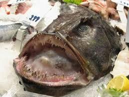 se masturbe dans la cuisine japon un homme se masturbe avec un poisson et finit à l hôpital