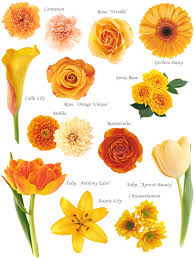 flower names by color hayley u0027s wedding tips 101
