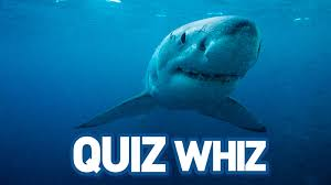 quiz whiz save our sharks