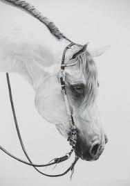 cowboy ranch horse colored pencil print 0101 pinterest