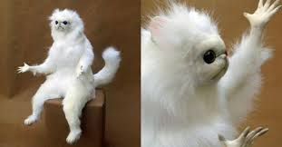 Persian Cat Meme - 15 hysterical persian cat room guardian memes that will speak to