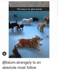 Animal Memes - 25 best memes about spirit animal spirit animal memes