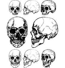 skull vector images 36 000