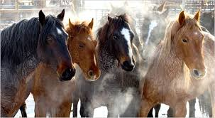 colorado mustang lawsuit filed to stop of colorado mustang herd