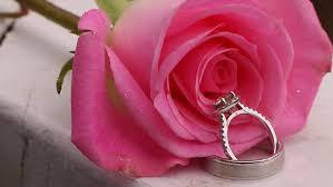 beautiful rose rings images Beautiful close up rose and wedding rings with water drops rain jpg