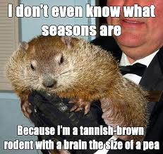 Rodent Meme - 8 groundhog day memes from punxsutawney phil