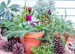 Plants For Winter Window Boxes - create a winter container garden hgtv
