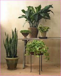 Low Light Indoor Flowers Low Light Indoor Plants U2013 Savingourboys Info
