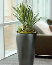 Fake Plants Superior Fake Plants For Office Silk U0026 Artificial Floor Plants