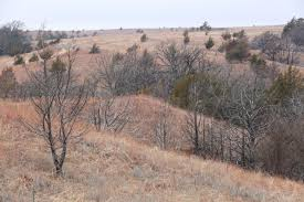 Wildfire Book Summary by Management Following A Wildfire Effects On Vegetation And Soils