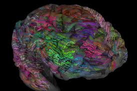 Thesaurus Assistant Scientists Map Brain U0027s Thesaurus To Help Decode Inner Thoughts