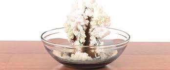 magic crystal tree sick science science experiments steve