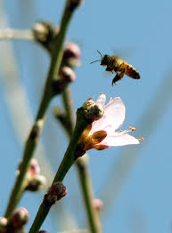 pollinators pests and pollinators