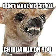 Funny Chihuahua Memes - pin by lori johnston on yep pinterest dog animal and doggies