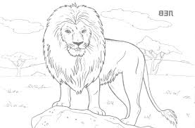 a any sketch of wild animals picture line drawings of animals