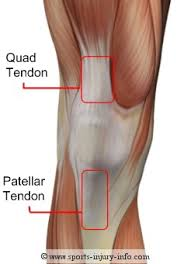 Anatomy Of Knee Injuries Knee Anatomy Sports Injury Info