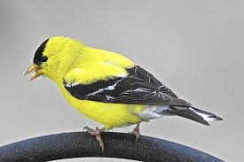 Canopy Birds by Gardening Column Fall Bird Migration Brings Out The Best In