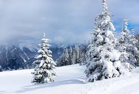 winter trees in alp mountains stock photo colourbox
