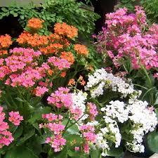 native plants houston garden center buchanan u0027s native plants
