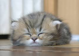 Sleepy Kitty Meme - cute sleepy kitty funny cat pictures
