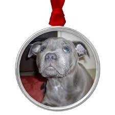 puppy staffy ornaments keepsake ornaments zazzle