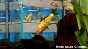 pet fish at petco u0026 petsmart youtube