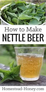 plante de cuisine how to nettle recipe plantes comestibles plantes