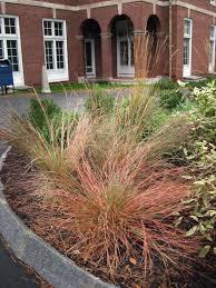massachusetts native plants native plants garden 911 fine organic gardening and landscaping
