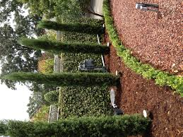 Lucca Steel Leaf Gazebo Cover by Italian Cypress Hardscape Front Yards Pinterest Front Yards