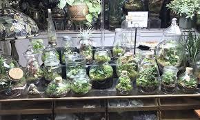 roosevelt u0027s terrariums portland terrariumsroosevelt u0027s terrariums