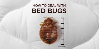 Bed Bug Exterminator Detroit How To Deal With Bed Bugs At Your Rental Property