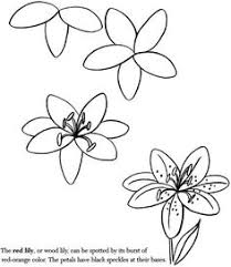 coloring page amusing how to draw aflower beginner drawing