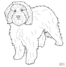 cockapoo coloring page free printable coloring pages