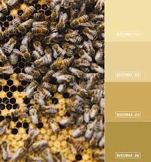 bee local honey hues u2022 colorhouse