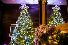 Christmas Trees Pests In Real Christmas Trees Debugged
