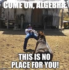 Stubborn Memes - stubborn mule memes imgflip