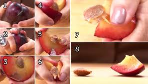 how to pit apricots plums nectarines u0026 other stone fruits like