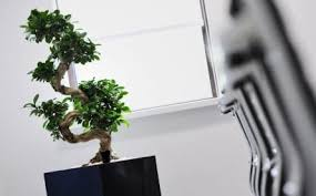 office plants great pot tropical plants for your offices