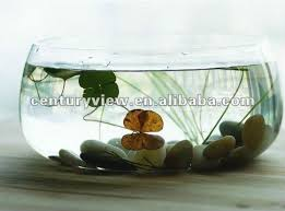glass fish bowl square glass fish bowls wedding flowers glass