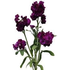burgundy flowers stock purple burgundy flower