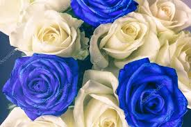 white blue roses bouquet of white and blue roses stock photo photo 127837430