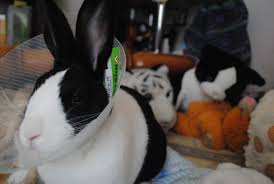 5 steps to turn your rabbit into a happy rabbit u2013 animalwhoop