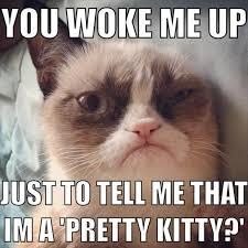 Angry Cat Meme Good - the best of grumpy cat 70 pics