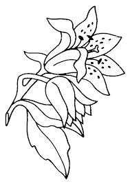 coloriage fleurs et plantes lys à colorier allofamille