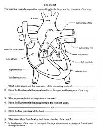 free parts of the heart worksheets describe the function of the
