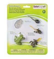 amazon com safari ltd life cycle of a frog toys u0026 games