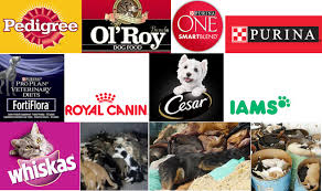 belgian shepherd quebec dead dogs dead cats are used as a pet food ingredient ottawa