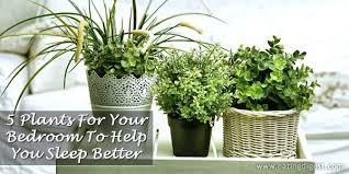 best plants for bedroom 5 plants for your bedroom to help you sleep better