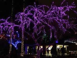 Zoo Lights Az by Phoenix Zoolights Travelwithscott